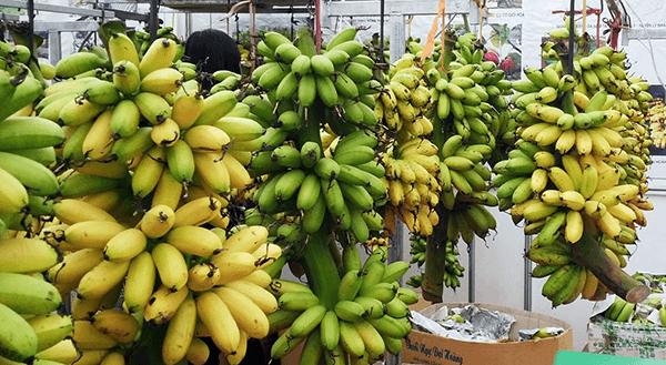 fruits banana